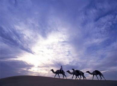 lux3081ls-95807-Camel ride